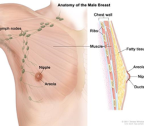 beyond breast cancer diagnosis fact know need treatment
